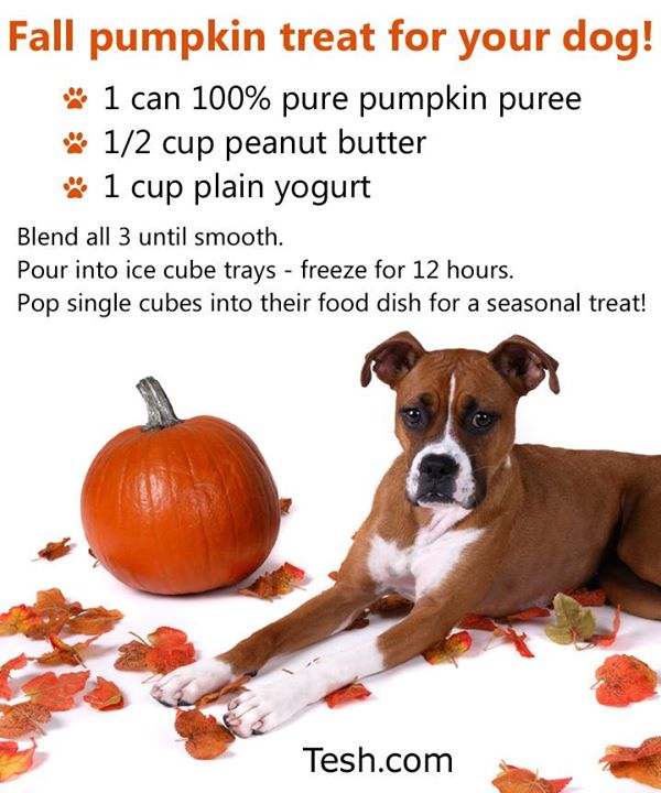 Fall_Pup-kin_Treat_John_Tesh