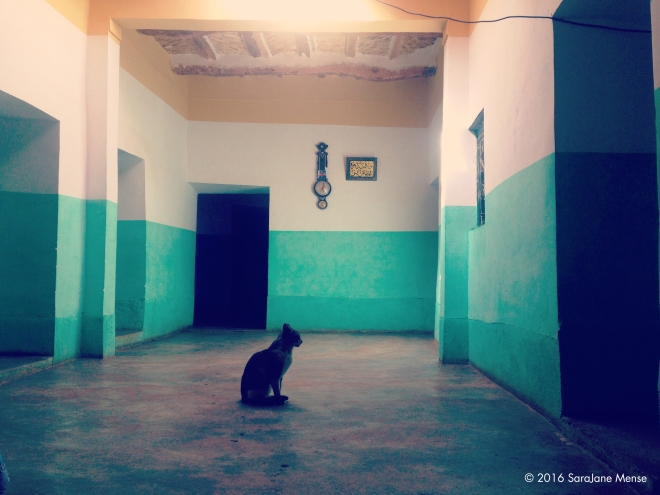 SJM_Cat_in_Teal_Hall