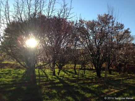 SJM_Morroco_Trees