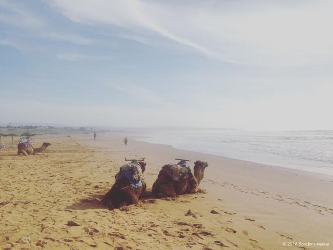 SJM_Watermark_Camels
