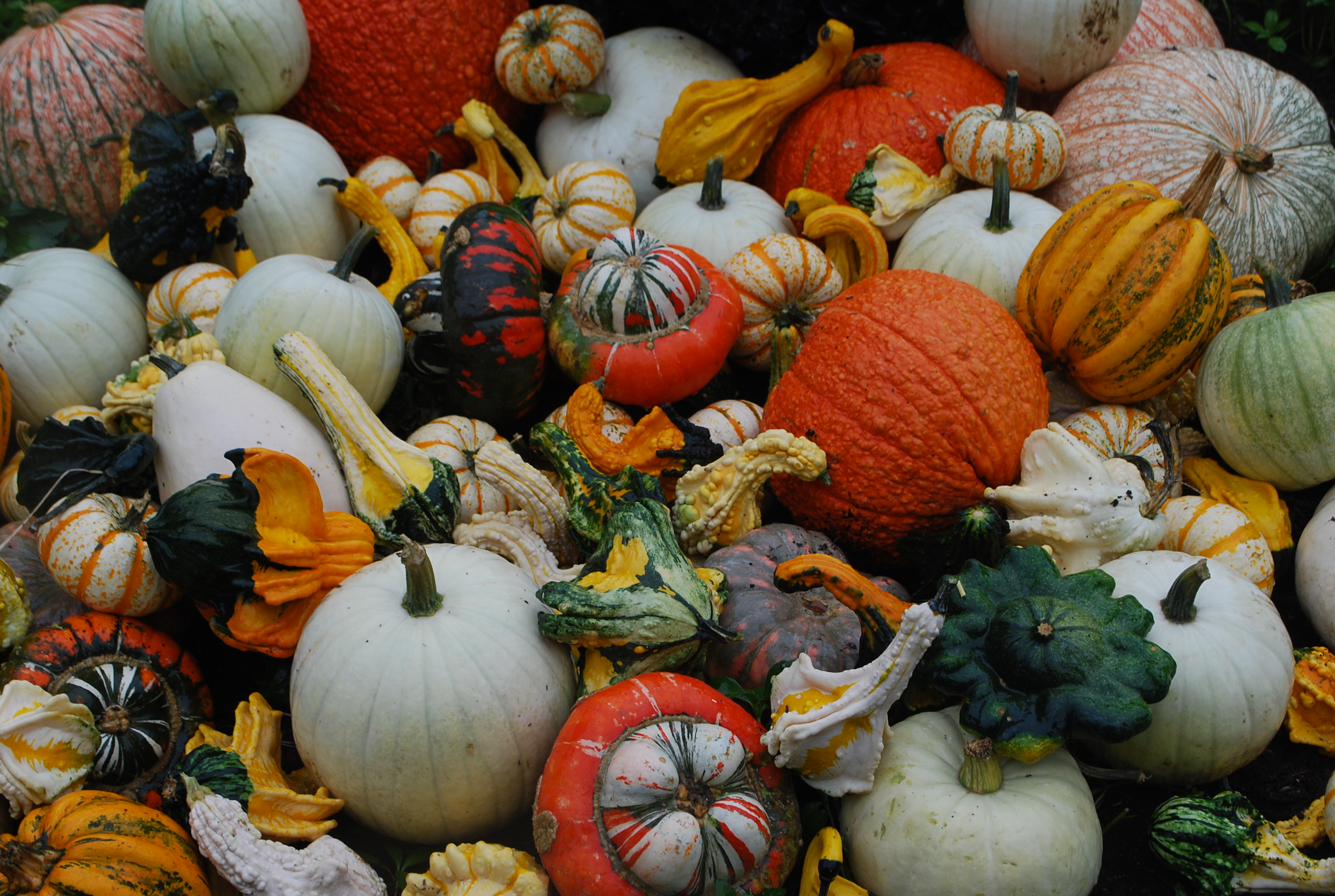 Going Gaga for Gourds | Let's Hear It For the Squash