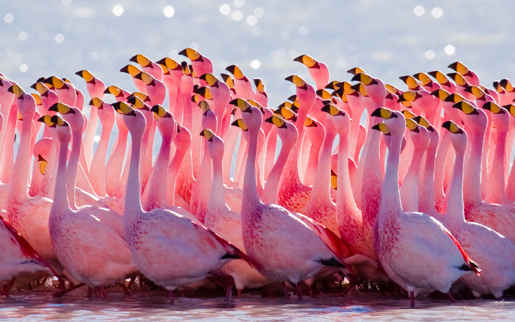 How to Live The Flamingo Life |Incorporating Flamingos Into Your Everyday Life